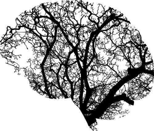 La plasticità del cervello non è da sottovalutare
